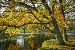 Autunno nel parco (2) - la Danimarca Immagine Stock