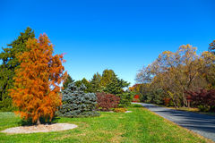 Autunno nell'arboreto nazionale degli Stati Uniti, Washington DC immagini stock libere da diritti