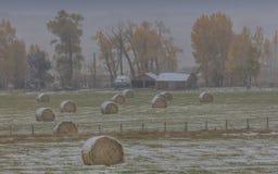 Autunno nell'inverno - la neve fresca cade sugli alberi di autunno fuori di Immagini Stock Libere da Diritti