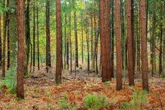 Autunno nella foresta Immagini Stock