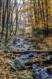 Autunno nella foresta immagini stock libere da diritti