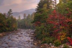 Autunno nella foresta Fotografia Stock