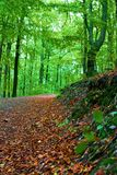 Autunno nella foresta Fotografie Stock Libere da Diritti