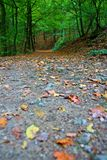 Autunno nella foresta Fotografie Stock