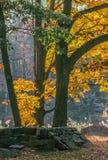 Autunno nella foresta Immagine Stock