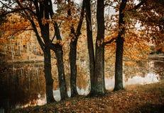 Autunno nella foresta Fotografia Stock Libera da Diritti