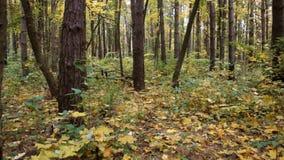 Autunno nella foresta che la macchina fotografica si muove da sinistra a destra stock footage