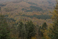 Autunno nella foresta nera Fotografia Stock Libera da Diritti