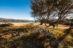 Autunno nella Patagonia Tierra del Fuego, Manica del cane da lepre Fotografie Stock Libere da Diritti