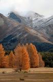Autunno nelle alpi 1 Fotografia Stock