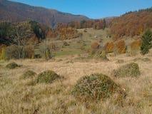Autunno nelle montagne (matrice Svidovets in montagne carpatiche ucraine) Fotografie Stock Libere da Diritti