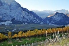Autunno nelle vigne di Trentino Italia Immagini Stock Libere da Diritti