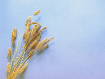 Autunno, orecchio su un fondo blu, decorazione con erba immagini stock