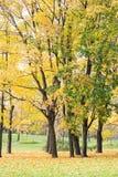 Autunno, paesaggio di caduta Fogliame arancio e variopinto Sosta Immagine Stock Libera da Diritti