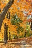 Autunno in parco sette immagine stock