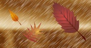 Autunno Pioggia e foglie cadenti Fotografie Stock Libere da Diritti