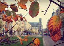 Autunno a Reims fotografia stock libera da diritti