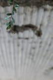 Autunno in Rio de Janeiro Fotografie Stock