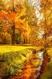 Autunno Scena di caduta Paesaggio della campagna con il mA rosso e giallo fotografie stock libere da diritti