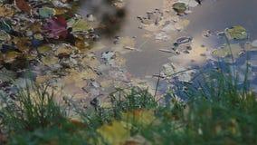 Autunno Stagno della foresta con delle le foglie colorate multi in acqua video d archivio