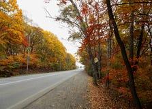 Autunno Strada principale provinciale fra il fogliame luminoso della foresta immagine stock