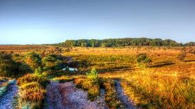Autunno sul terreno comunale di Woodbury, Devon Immagini Stock
