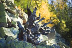 Autunno sulle montagne rocciose Fotografia Stock Libera da Diritti