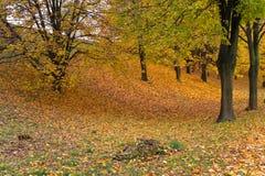 Autunno in un parco Fotografia Stock