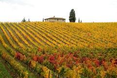 Autunno in un Wineyards in Toscana, Chianti, Italia Fotografie Stock