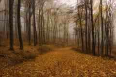 Autunno in una foresta arancione con nebbia fotografie stock