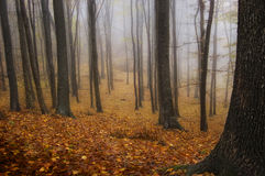 Autunno in una foresta con nebbia fotografie stock