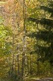 Autunno in una foresta mixed fotografia stock libera da diritti