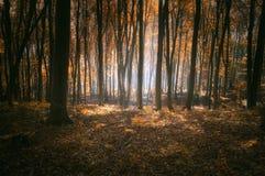 Autunno in una foresta rossa Fotografie Stock Libere da Diritti