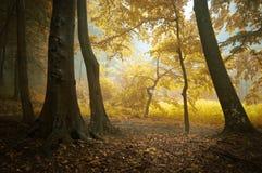 Autunno in una foresta variopinta Fotografia Stock