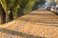 Autunno, una strada della sabbia delle foglie conta Fotografia Stock