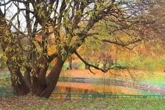 Autunno, uno stagno in un parco incorniciato con le foglie dorate Fotografie Stock