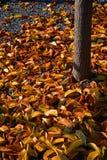 Autunno, variopinto le foglie cadenti Fotografia Stock Libera da Diritti