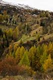 Autunno variopinto nelle alpi della dolomia dei montains Fotografia Stock