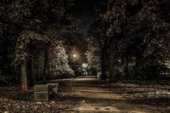 Autunno Vicolo dell'acero alla notte Kronštadt Immagine Stock