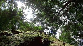 Auvent 1 de forêt tropicale banque de vidéos