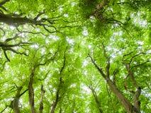 Auvent de Forrest images libres de droits