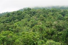 Auvent de forêt tropicale Photographie stock libre de droits