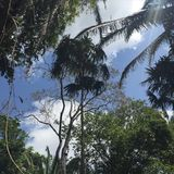 Auvent de jungle Photos libres de droits