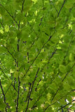 Auvent de vert Photo stock