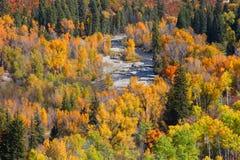 Auvent des arbres d'automne Image libre de droits