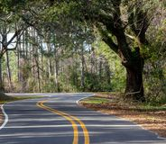 Auvent des chênes au-dessus d'une route de campagne photographie stock