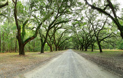 Auvent des chênes couverts dans la mousse Parc de Forsyth, la savane, Geo Images libres de droits