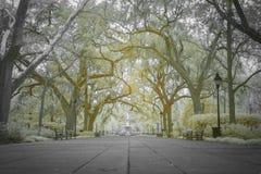 Auvent des chênes et de la fontaine au parc de Forsyth Photographie stock