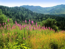 Auvergne lizenzfreies stockbild
