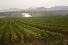 Auvergne sprinkler irrigation Stock Image